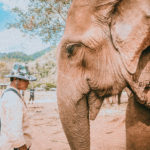 mahout resting on his elephant in elephant nature park thailand chiang mai