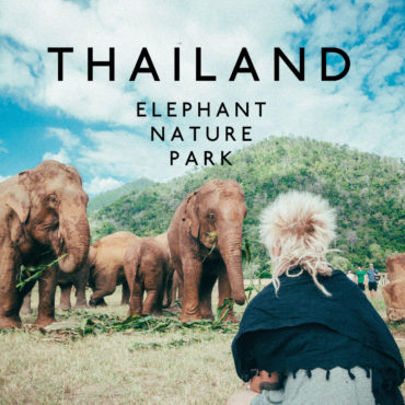 Volunteering At Elephant Nature Park, Chiang Mai