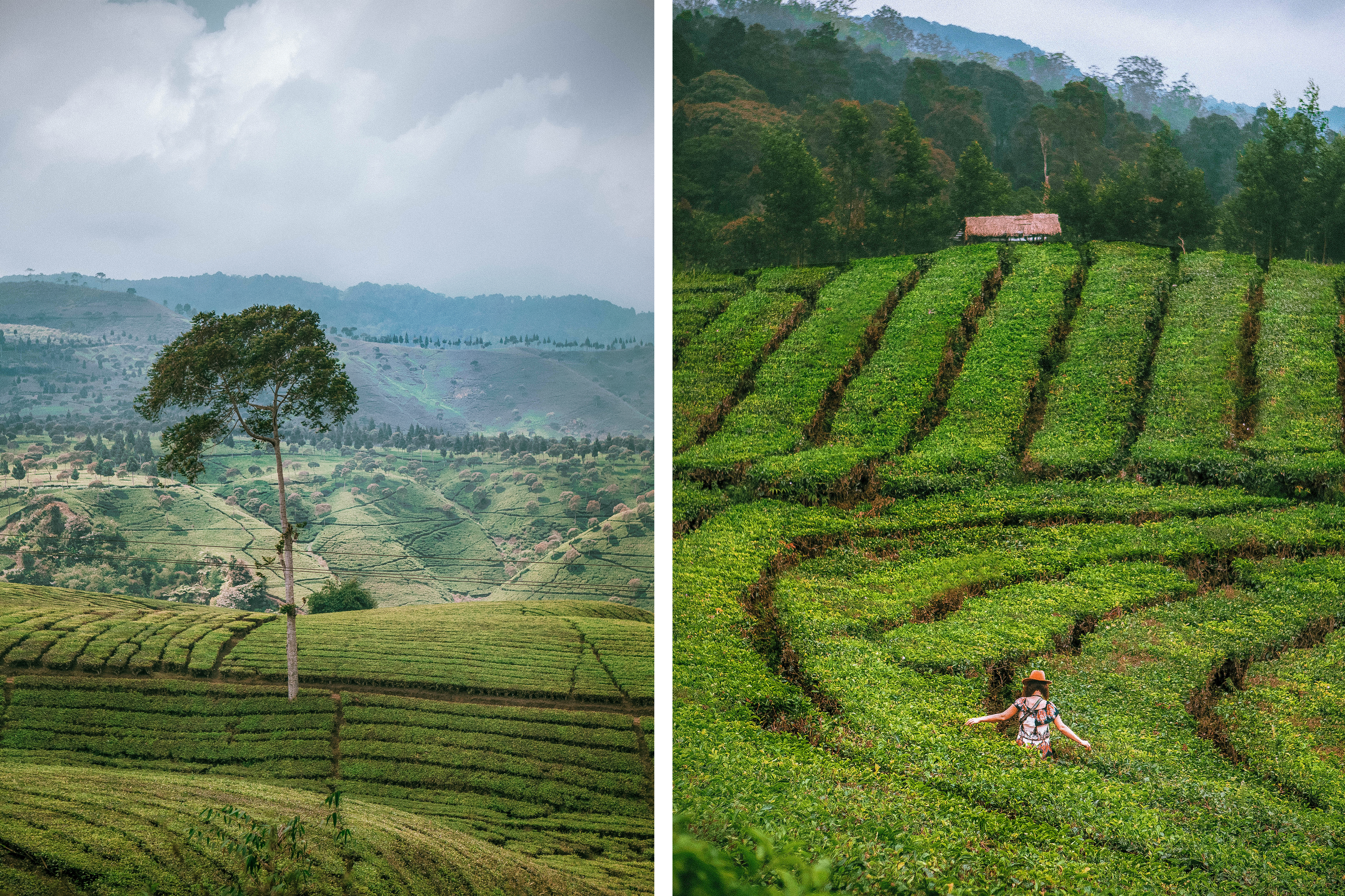 driving around west java indonesia tea plantations nature beautiful green